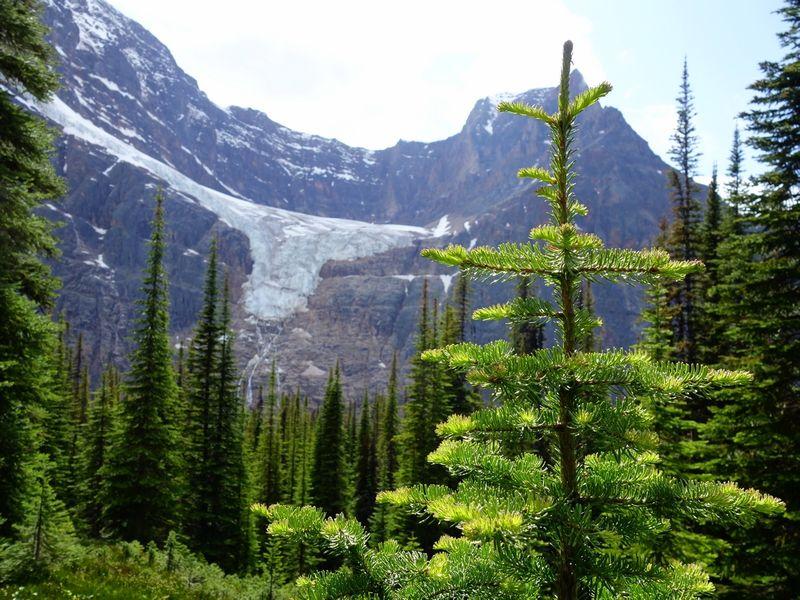 Cavell Meadows Angel Glacier