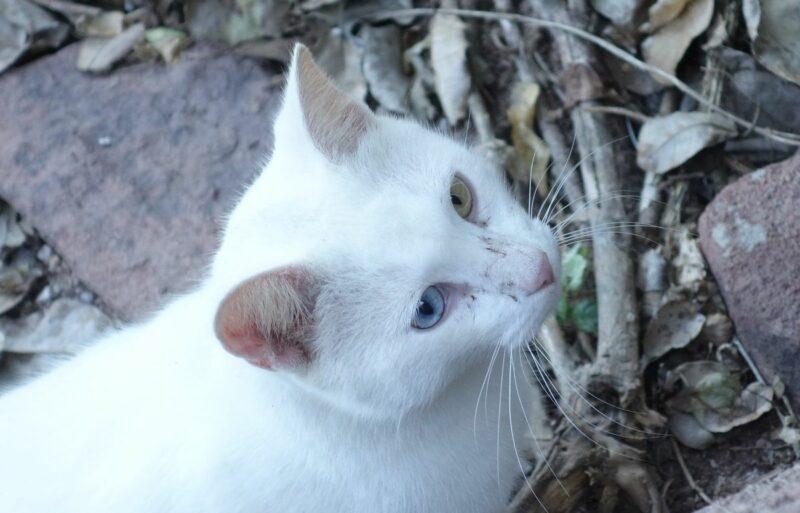 Gato del Faro 1