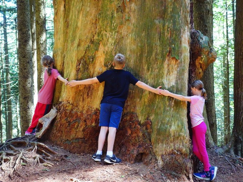 Hennessey Chlidren Tree Hug Cypress Hike