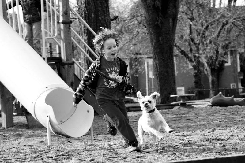 Jetpack the Dog
