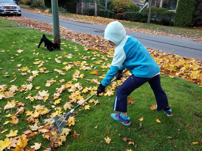 Leaf Raking Business